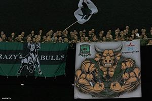 быки!